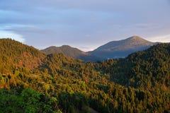 Zmierzch na Greckich Halnej sosny lasach, Grecja Zdjęcia Royalty Free