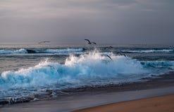 Zmierzch na plaży, dużych falach i kierdlu ptaki, Guadalupe diun przyrody Krajowa rezerwa, Kalifornia zdjęcia royalty free