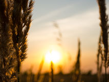 Zmierzch na rolniczym polu Zdjęcie Stock