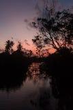 Zmierzch na rzecznej sylwetce drzewa i palmowy odbicie Obraz Royalty Free