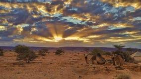 Zmierzch na Sahara zdjęcia royalty free