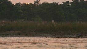 Zmierzch na spokojnej rzece w lecie Słońce odbija na spokój wodzie z zielonym brzeg Chitwan safari Krajowy park w Nepal zbiory wideo