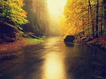 Zmierzch nad góry rzeka zakrywająca pomarańczowymi bukowymi liśćmi Bended gałąź above - woda Obraz Stock