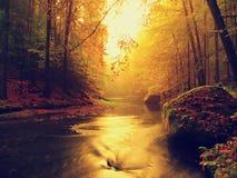 Zmierzch nad góry rzeka zakrywająca pomarańczowymi bukowymi liśćmi Bended gałąź above - woda Fotografia Stock