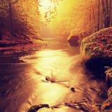 Zmierzch nad góry rzeka zakrywająca pomarańczowymi bukowymi liśćmi Bended gałąź above - woda Obrazy Royalty Free