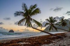 Zmierzch nad Karaibską Martinique plażą kokosowy Le Diamant fotografia royalty free
