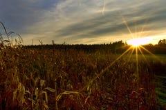 Zmierzch nad kukurydzanym polem fotografia stock