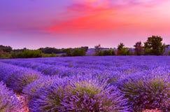 Zmierzch nad lawendy polem w Provence Obraz Royalty Free