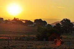 Zmierzch nad małym kraju miasteczkiem, koniami w padoku & fotografia stock