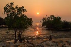 Zmierzch nad mangrowe przy Pantai Jeram, zachodnie wybrzeże Malezja zdjęcia royalty free