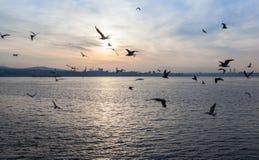 Zmierzch nad morzem z seagulls Obraz Stock