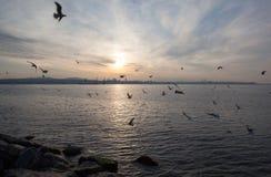 Zmierzch nad morzem z seagulls, Istanbuł Obrazy Royalty Free
