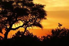 Zmierzch nad Okovango deltą Obraz Stock