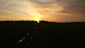 zmierzch nad ryżowymi polami fotografia royalty free