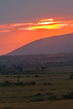 Zmierzch nad sawanną w Masai Mara Kenja Fotografia Royalty Free