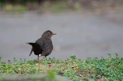 Zmierzch nad władza słupami, drzewem i airplaneblackbird na szarym tle, Fotografia Royalty Free