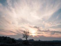 Zmierzch nad wiejskim polem, osamotniony drzewo zbiory