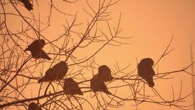 Zmierzch natury wron kierdel ptaki siedzi na drzewnej zimnej zimie Zdjęcia Royalty Free