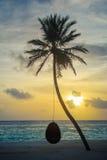 Zmierzch palma Zdjęcie Stock