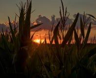 Zmierzch patrzeje przez kukurydzanego pola Fotografia Stock