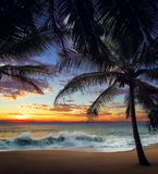 Zmierzch plaża z drzewkami palmowymi i pięknym niebem zdjęcie stock