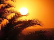 Zmierzch plaża przez drzewek palmowych Zdjęcia Stock