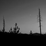 Zmierzch przez drzew Obraz Royalty Free
