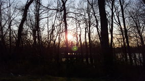 Zmierzch przez drzew Fotografia Royalty Free