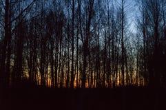 Zmierzch przez drzew Zdjęcie Royalty Free