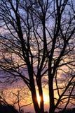 Zmierzch przez drzewa Obraz Royalty Free