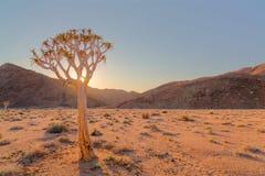 Zmierzch przez kołczanu drzewa Fotografia Stock
