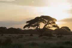 Zmierzch przy Amboseli parkiem narodowym Obraz Stock
