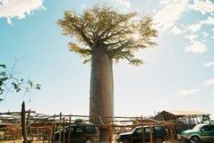 Zmierzch przy baobab aleją Zdjęcie Stock