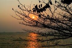 Zmierzch przy morzem z silhoette drzewny przedpole obrazy stock
