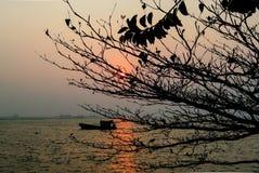 Zmierzch przy morzem z silhoette drzewny przedpole zdjęcia royalty free