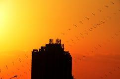 Zmierzch przy Pekin Olimpijskim parkiem z kaniami Zdjęcia Stock