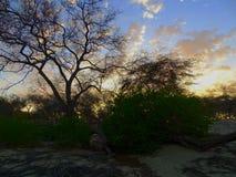 Zmierzch przy suchym lasem Zdjęcie Royalty Free
