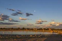 Zmierzch przy waterhole w Namibia Zdjęcie Royalty Free
