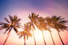 Zmierzch przy zwrotnikami z drzewkami palmowymi Fotografia Royalty Free
