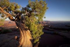 zmierzch pustynne jałowcowe stare pogody Zdjęcia Royalty Free