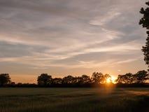 Zmierzch scena outside w rolnym polu zielona uprawa i golde Fotografia Royalty Free