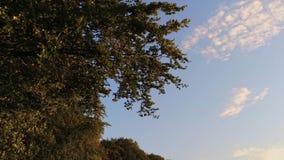 Zmierzch scenerii odbicia jeziornego wschodu słońca wody powierzchni gładki flyover zbiory wideo