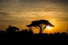 Zmierzch sylwetka akacjowi drzewa w Afrykańskiej sawannie Obraz Royalty Free