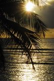ZMIERZCH Tropikalna palma Przeciw morzu Guadeloupe zdjęcie royalty free