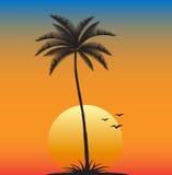 zmierzch tropikalny Obrazy Royalty Free