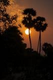 zmierzch tropikalny Fotografia Stock