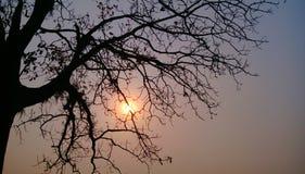 zmierzch łuna drzewo zdjęcie royalty free