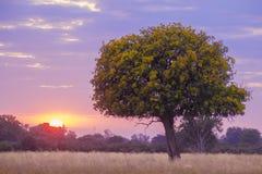 Zmierzch w Botswana obrazy stock