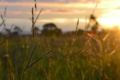 Zmierzch w Cerrado Zdjęcie Stock
