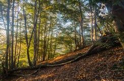 Zmierzch w Drewnach zdjęcie stock